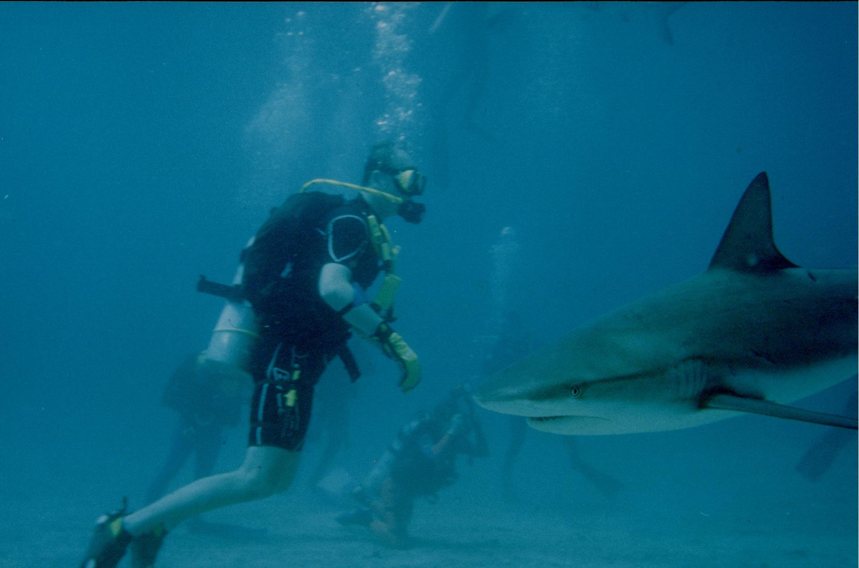 Walker's Cay, Nassau Bahamas, Underwater
